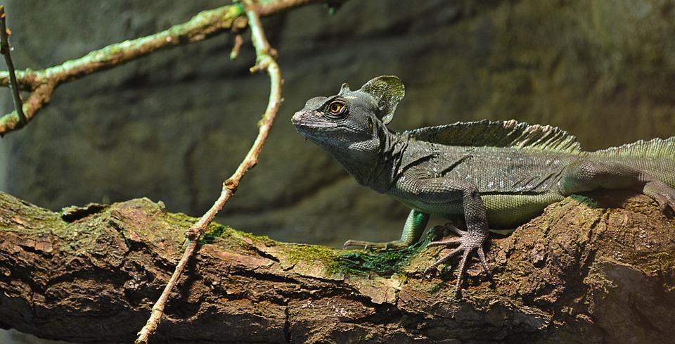 lizard-755671_960_720.jpg